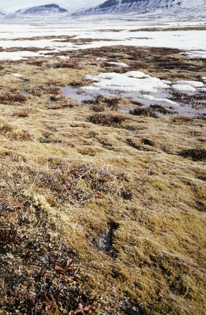 Permafrost in the Arctic, the ground is not always covered with snow (Photo: GettyImages)