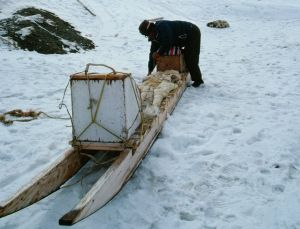 Inuit packing his sled in Nunavut (Photo: GettyImages)