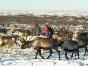 (Photo: Arctic Portal) Traditional Inuit reindeer gather
